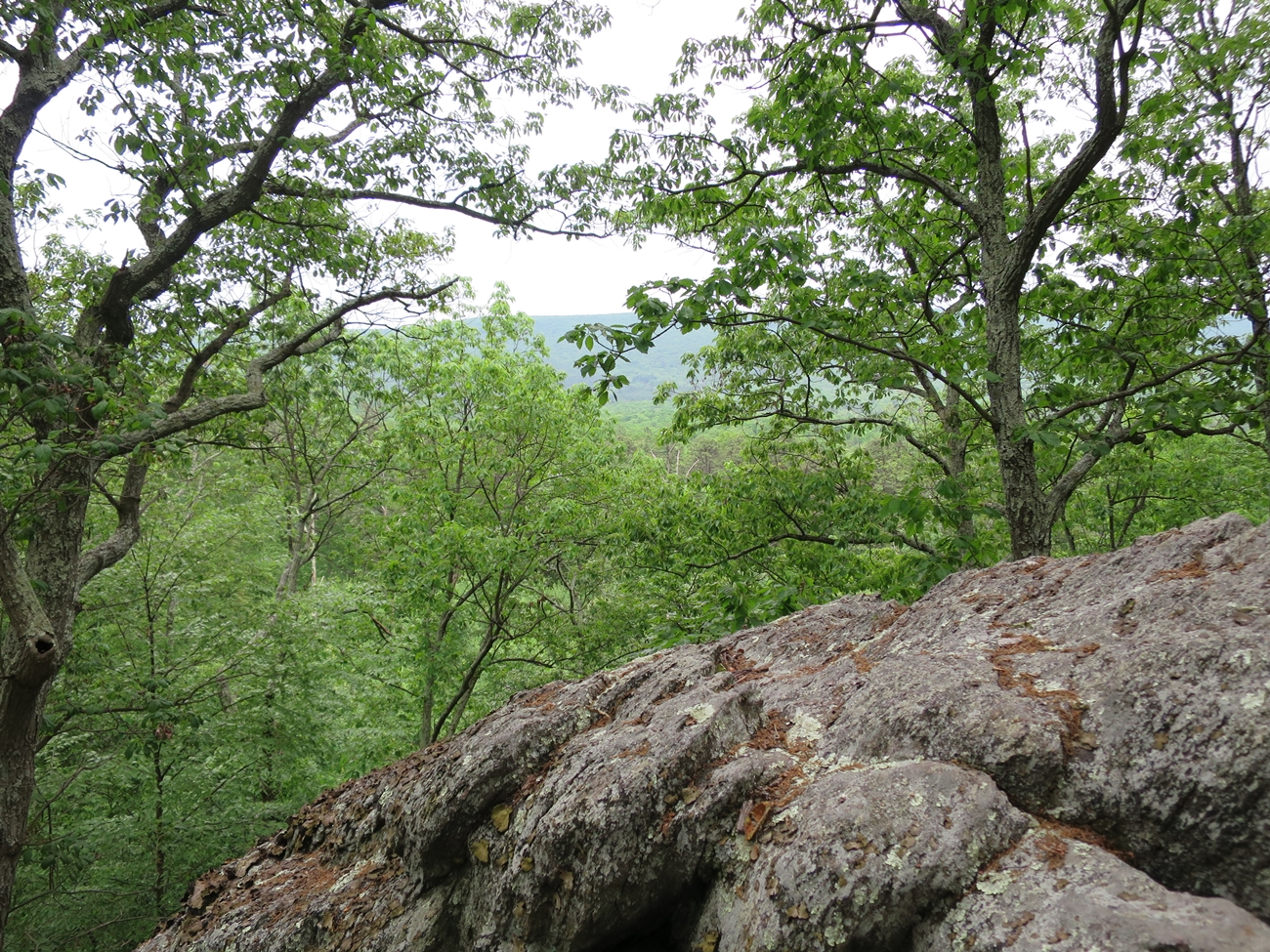 Michaux-State-Forest-047
