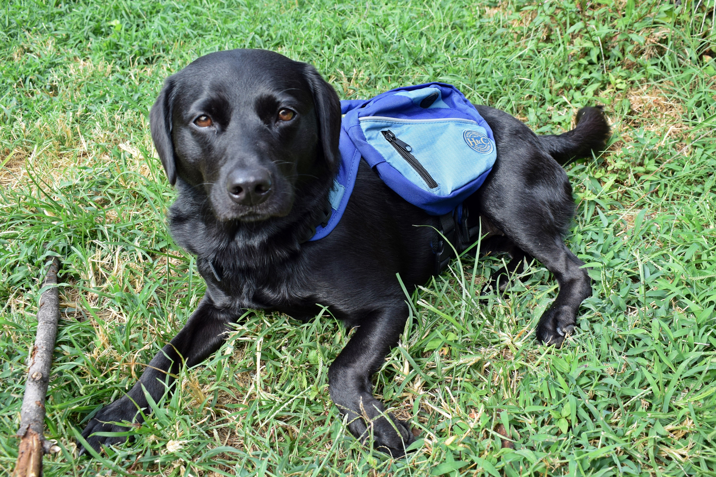 the ultimate packing list for camping with your dog a free